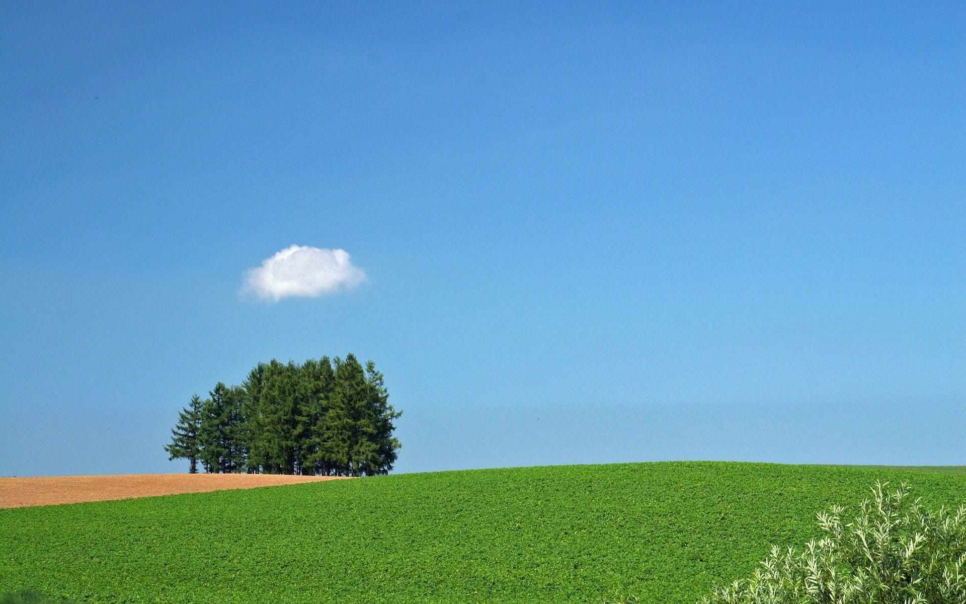 69492 免費下載壁紙 性质, 场地, 字段, 树, 云, 云端, 夏天 屏保和圖片