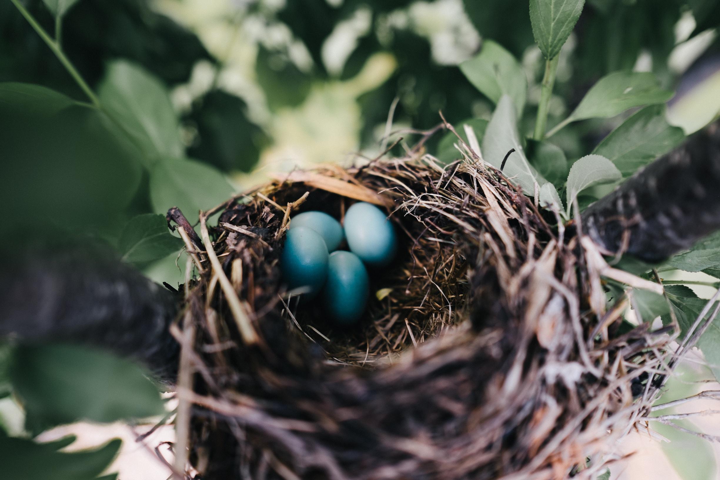 124799 Заставки и Обои Яйца на телефон. Скачать Природа, Яйца, Гнездо, Дрозд картинки бесплатно