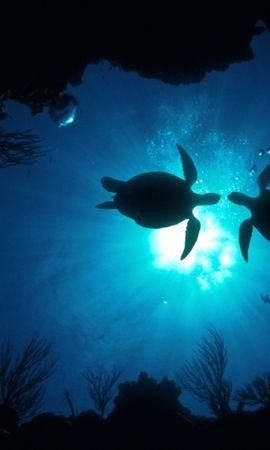 31103 скачать обои Пейзаж, Черепахи, Море - заставки и картинки бесплатно