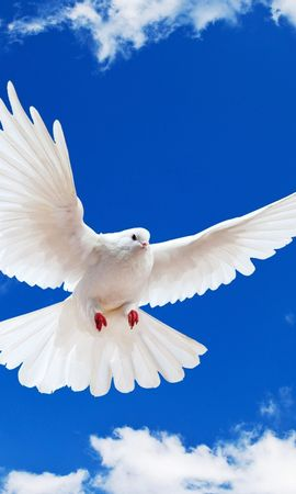 19307 download wallpaper Animals, Birds, Sky, Pigeons screensavers and pictures for free