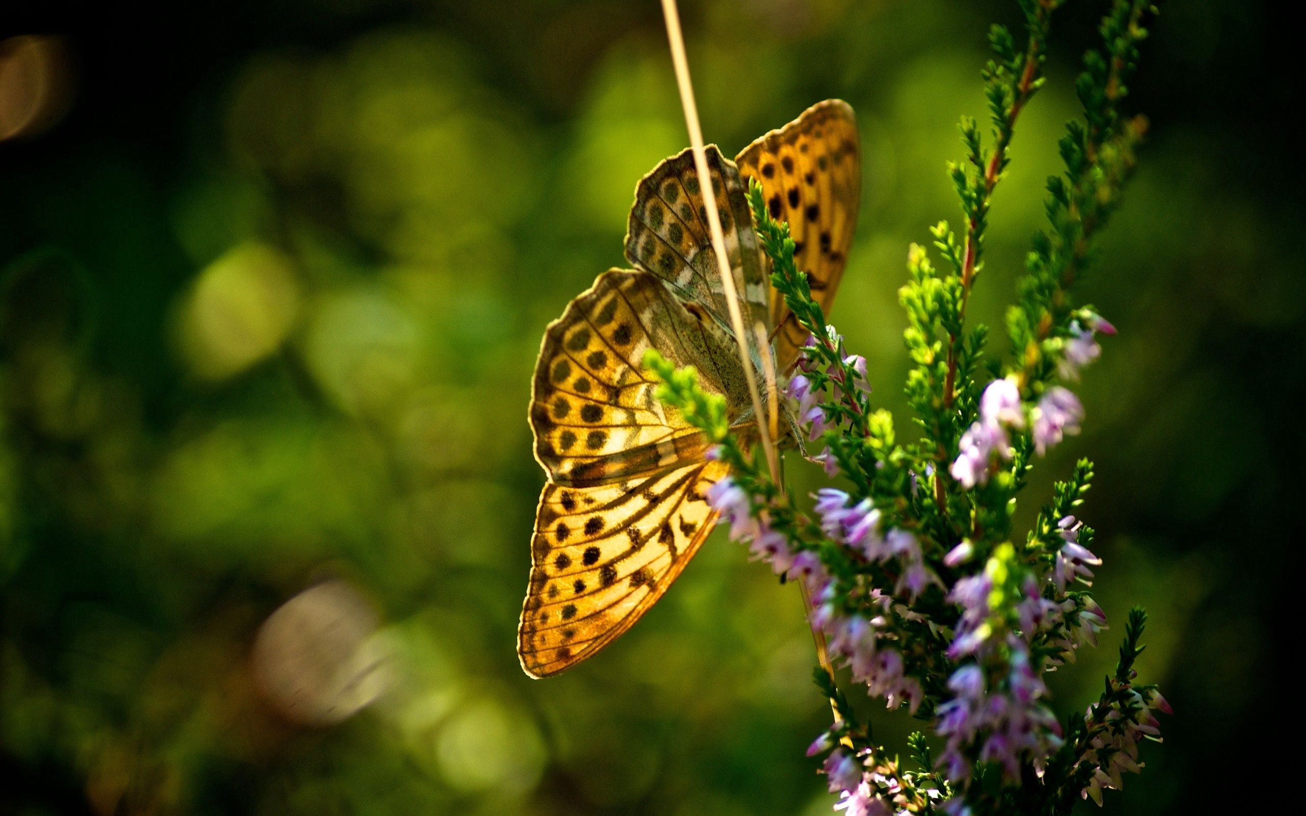 64643 Screensavers and Wallpapers Butterfly for phone. Download Grass, Plant, Macro, Flight, Butterfly pictures for free