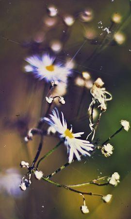 20529 скачать обои Растения, Цветы - заставки и картинки бесплатно