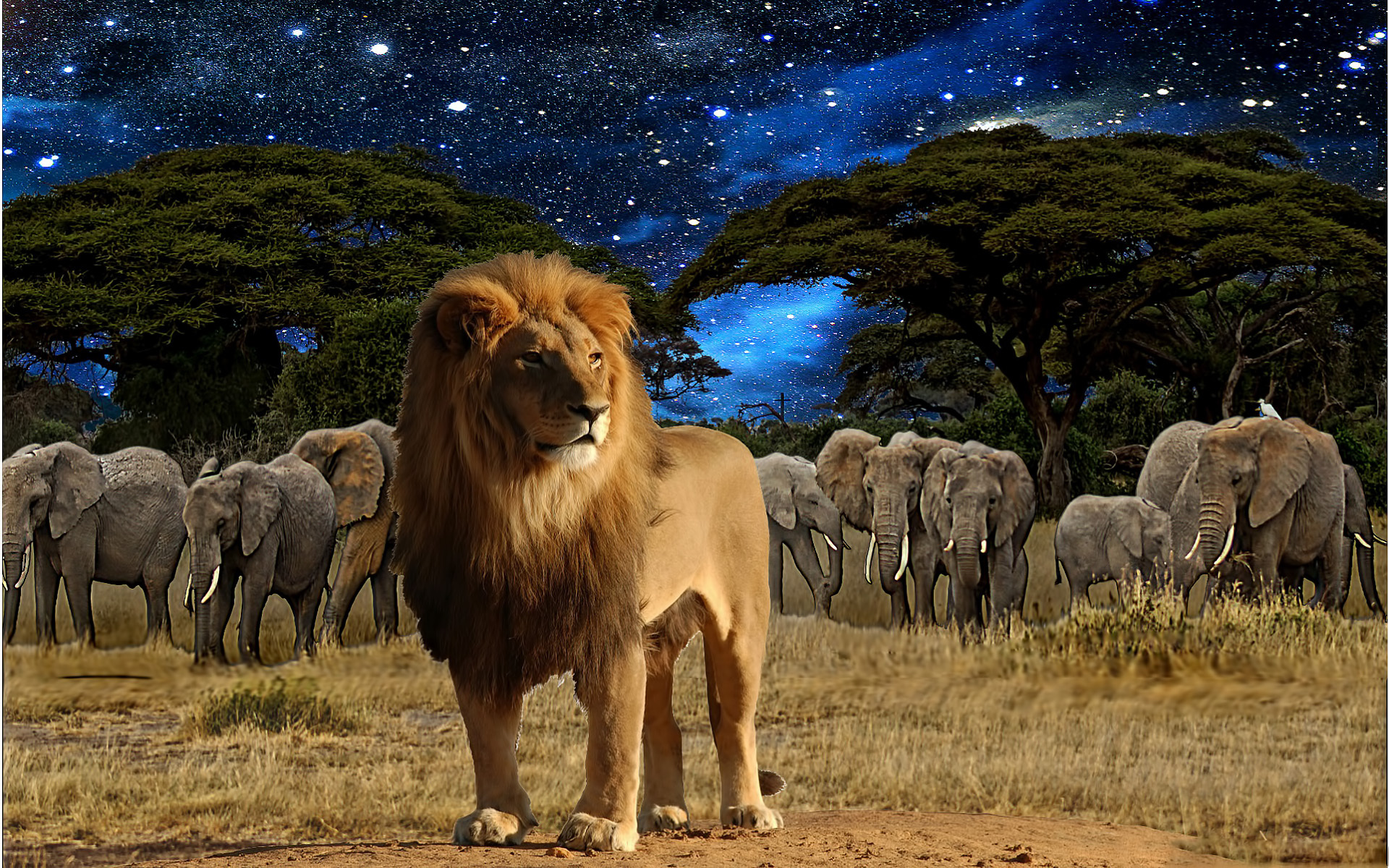28970 download wallpaper Animals, Lions screensavers and pictures for free