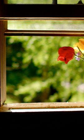 20746 скачать обои Растения, Пейзаж, Цветы, Букеты - заставки и картинки бесплатно