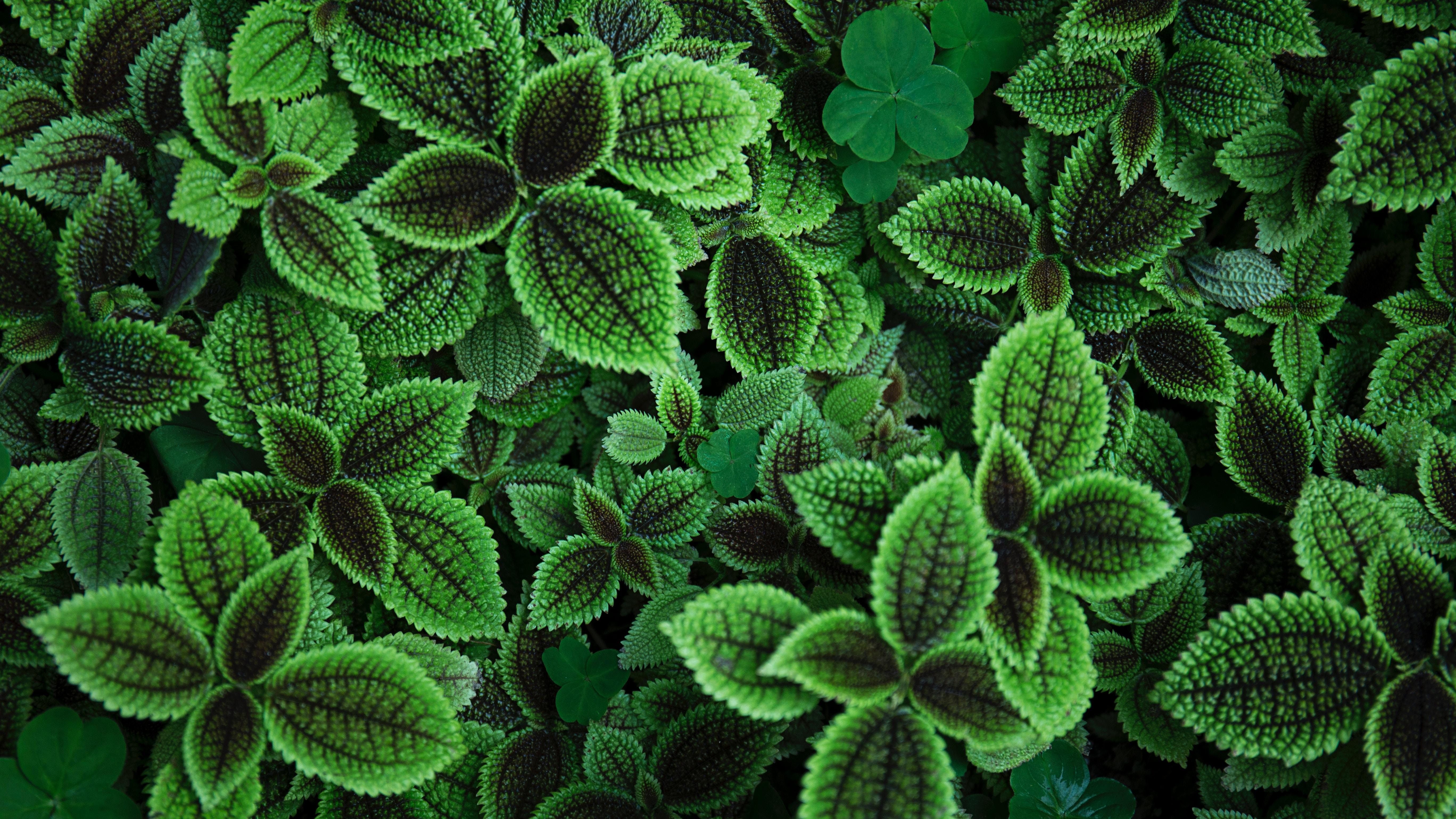97683 скачать обои Природа, Листья, Растение, Зеленый - заставки и картинки бесплатно