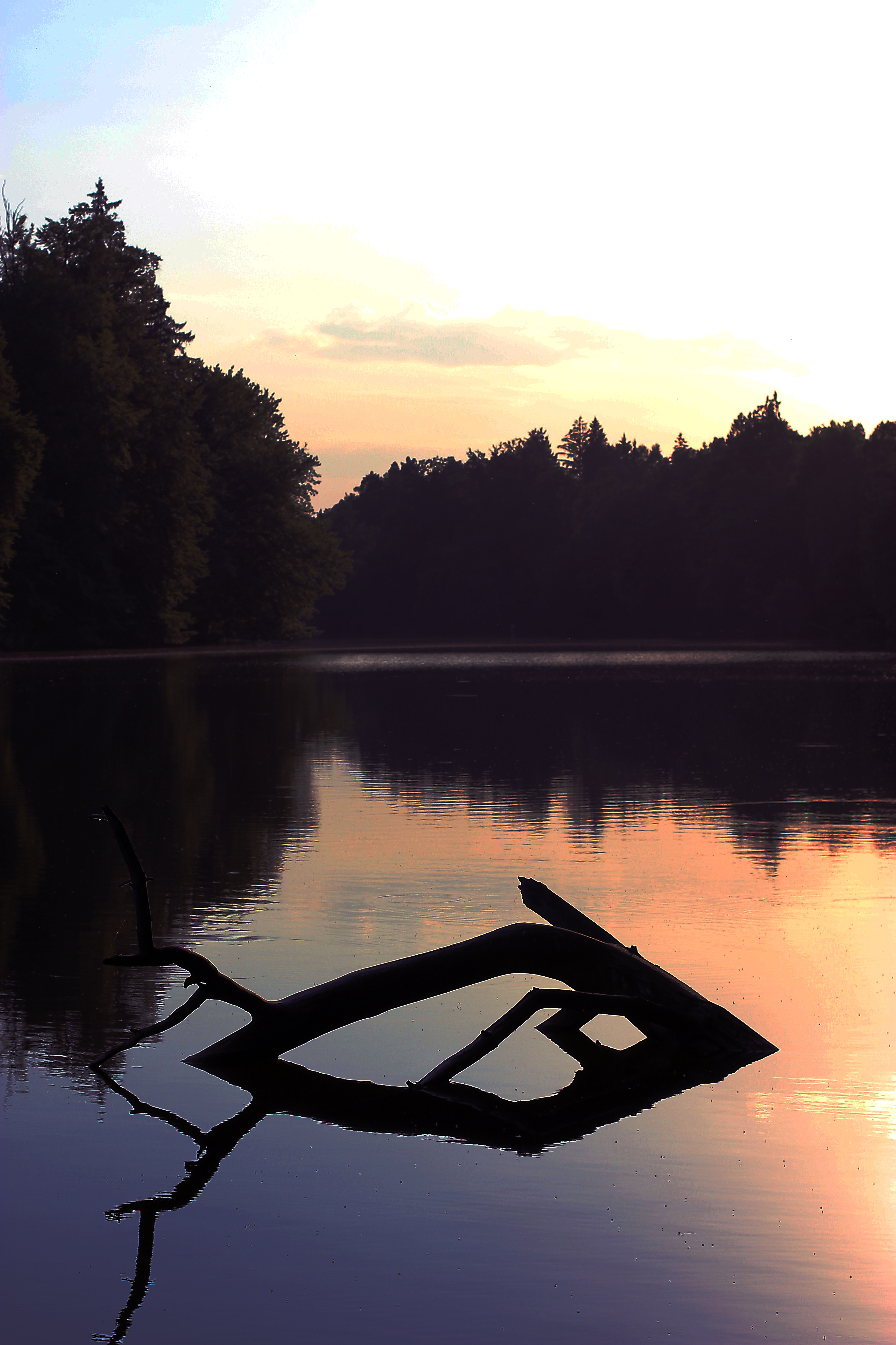 135091 download wallpaper Nature, Lake, Trees, Dusk, Twilight, Snag, Forest screensavers and pictures for free