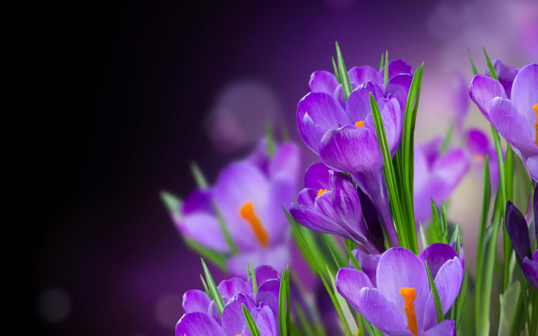 40718 Hintergrundbild herunterladen Blumen, Pflanzen - Bildschirmschoner und Bilder kostenlos