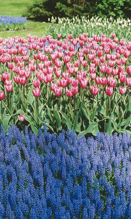 4233 скачать обои Растения, Цветы, Фон - заставки и картинки бесплатно