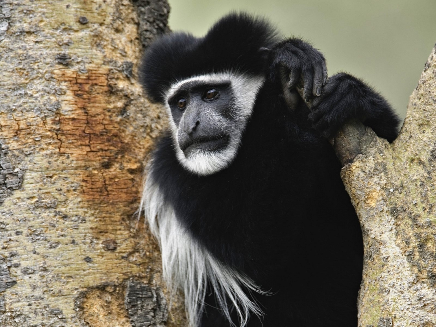 39839 Screensavers and Wallpapers Monkeys for phone. Download Animals, Monkeys pictures for free