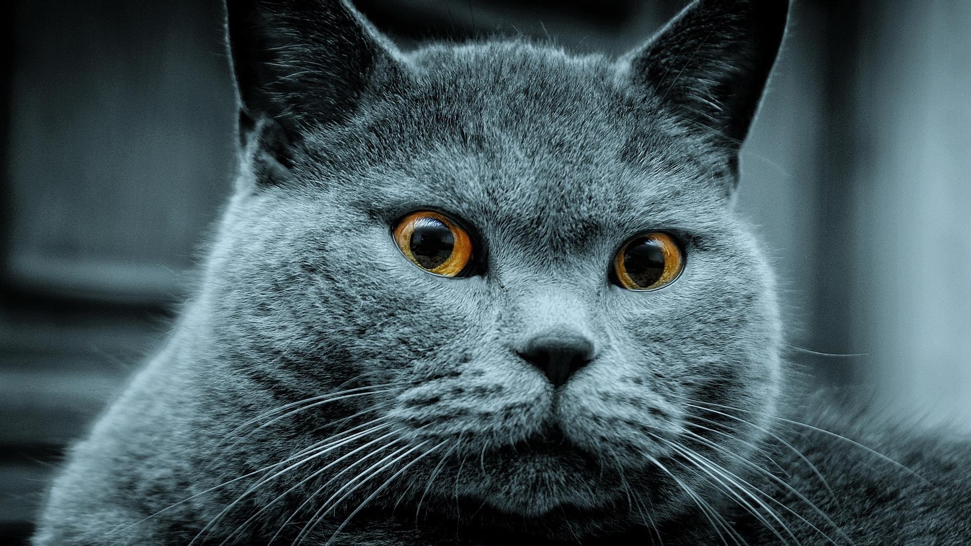 49704 免費下載 蓝绿色 手機壁紙,动物, 猫 蓝绿色 圖像和手機屏保