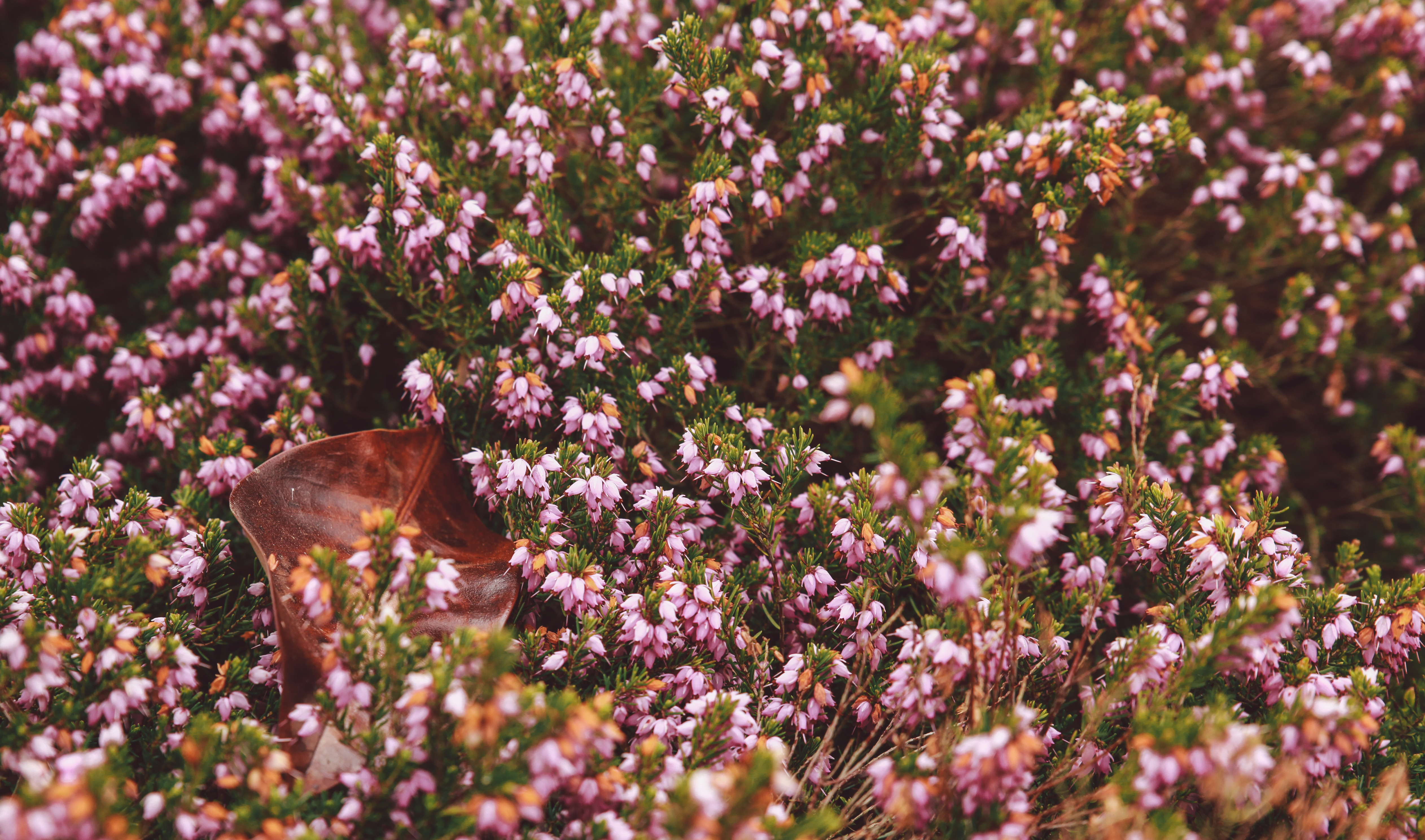 114962 download wallpaper Flowers, Garden, Flower Bed, Flowerbed, Autumn screensavers and pictures for free