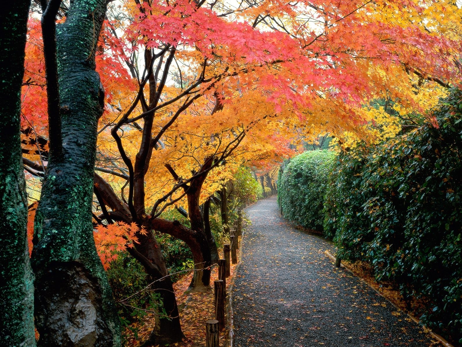 Скачать картинку Пейзаж, Деревья, Дороги, Осень в телефон бесплатно.