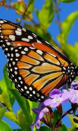 43016 Salvapantallas y fondos de pantalla Insectos en tu teléfono. Descarga imágenes de Mariposas, Insectos gratis