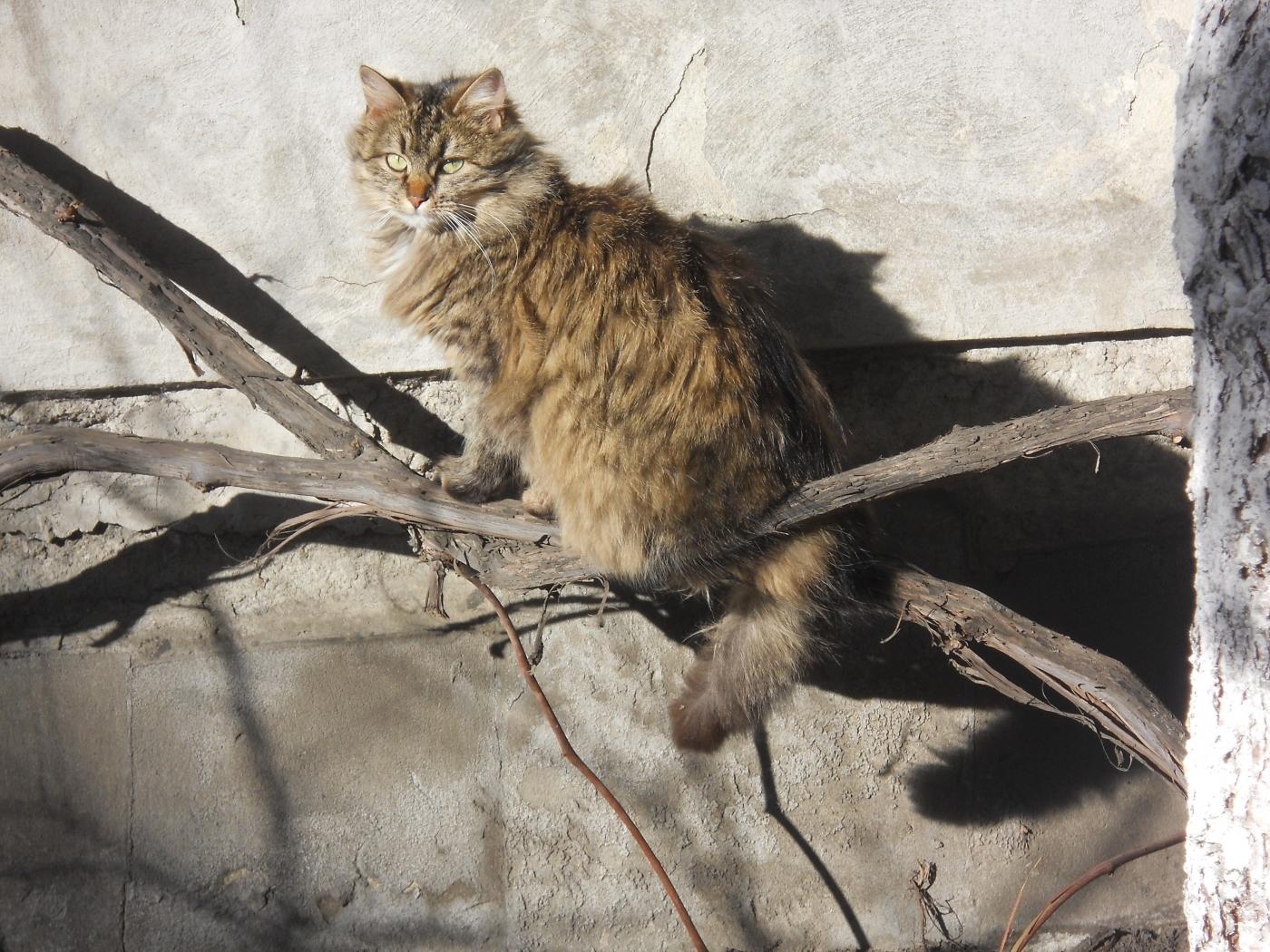 24353 скачать обои Животные, Кошки (Коты, Котики) - заставки и картинки бесплатно