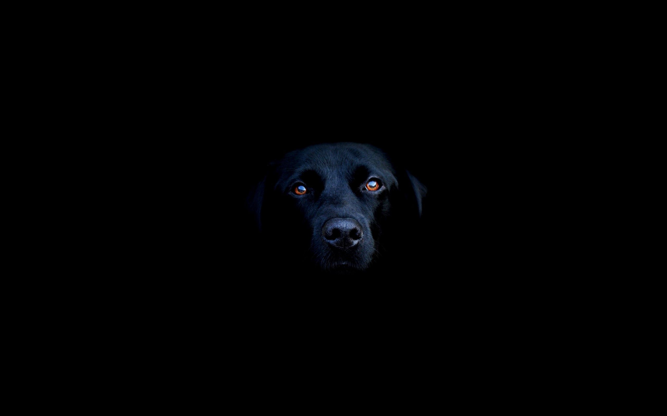 139008 Screensavers and Wallpapers Nose for phone. Download Dog, Muzzle, Eyes, Minimalism, Shadow, Nose pictures for free
