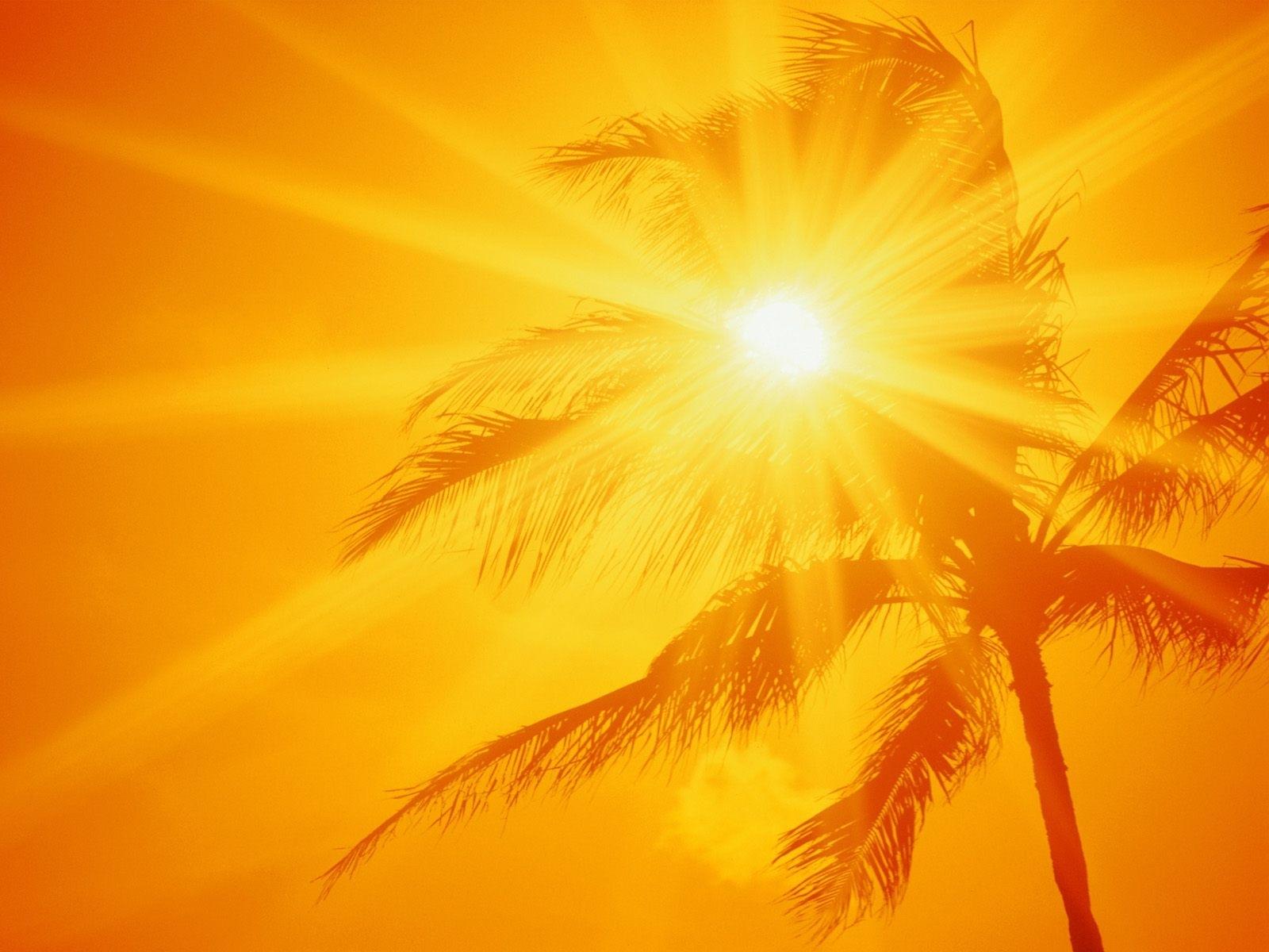 8248 скачать Желтые обои на телефон бесплатно, Фон, Солнце, Пальмы Желтые картинки и заставки на мобильный