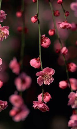 42430 descargar fondo de pantalla Plantas, Flores: protectores de pantalla e imágenes gratis