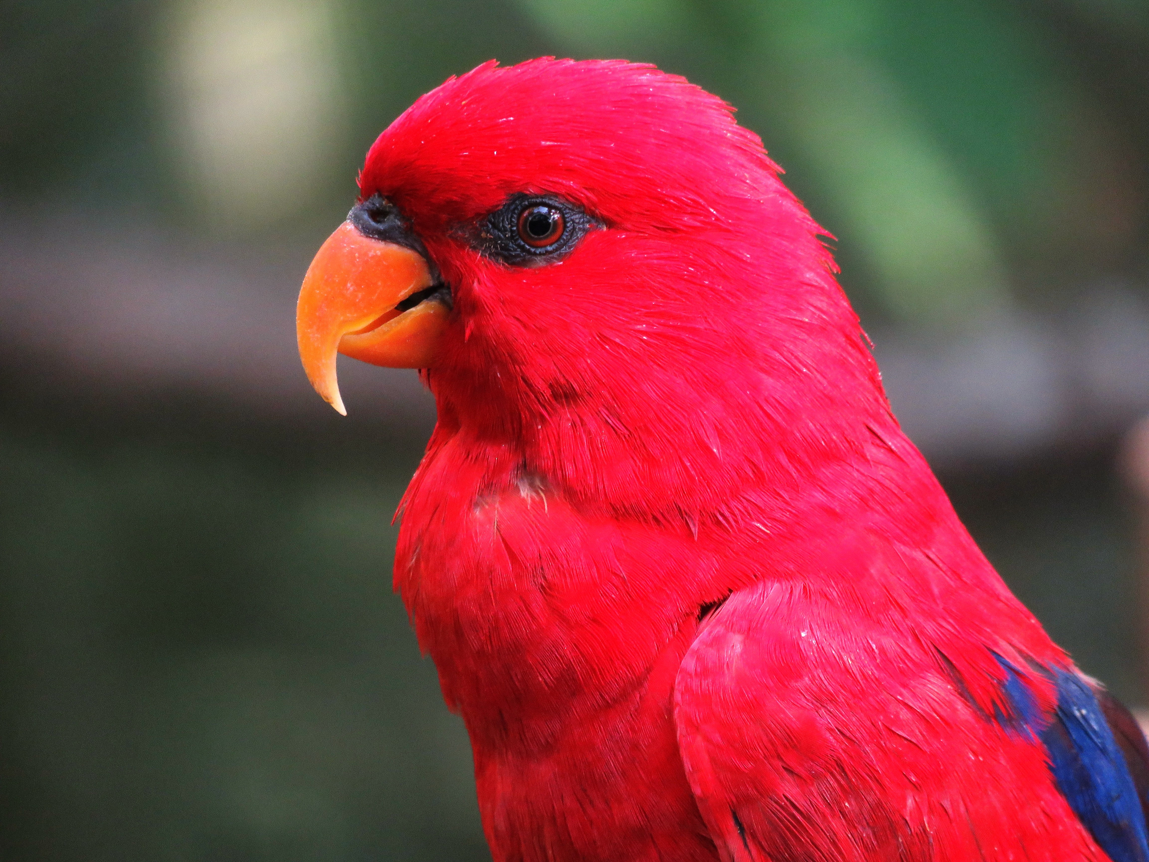 65206 download wallpaper Animals, Macaw, Parrots, Bright screensavers and pictures for free