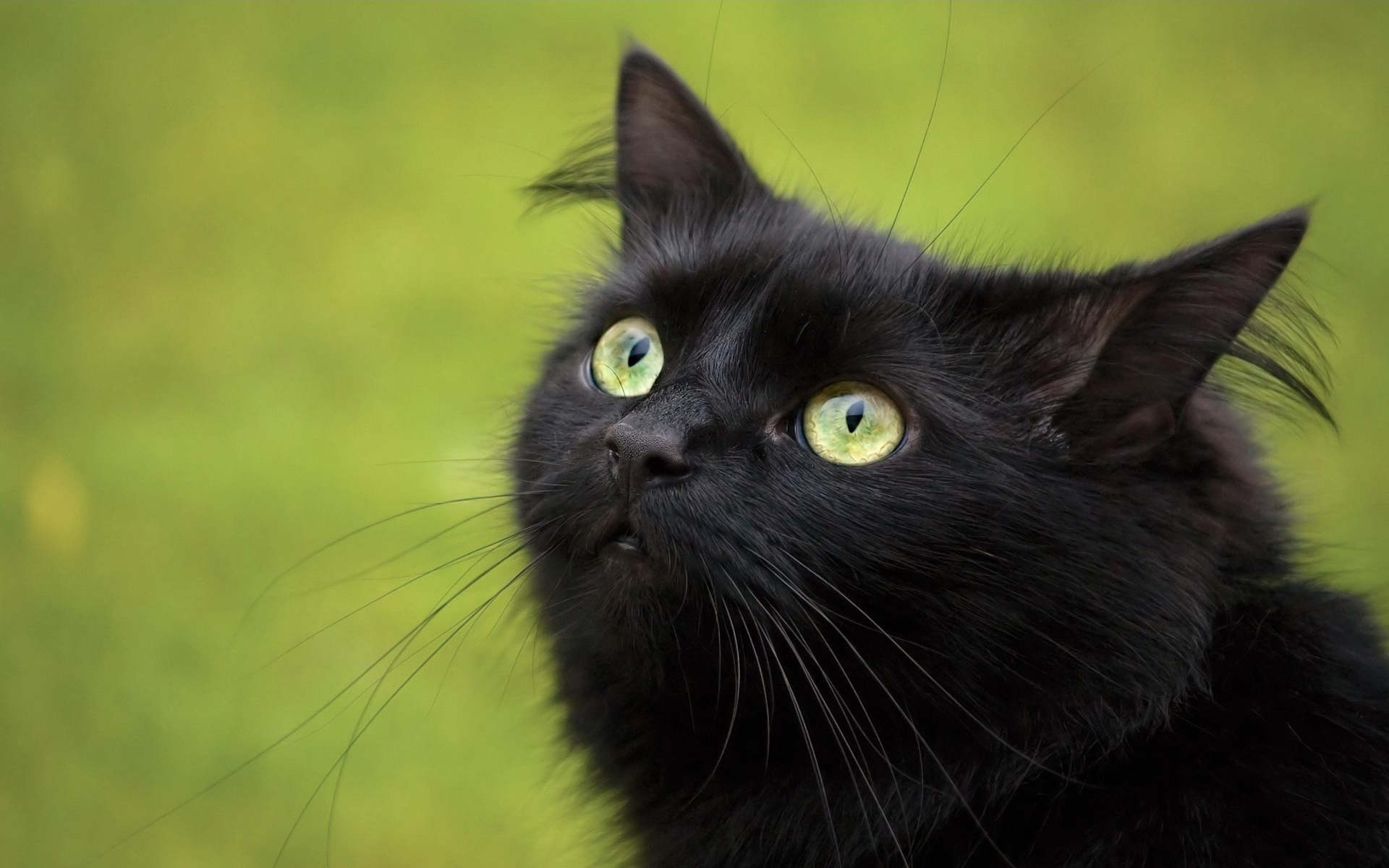 49475 download wallpaper Animals, Cats screensavers and pictures for free