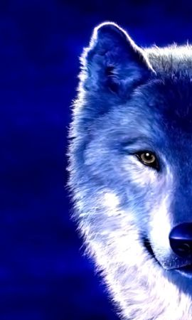 43887 download wallpaper Animals, Wolfs screensavers and pictures for free