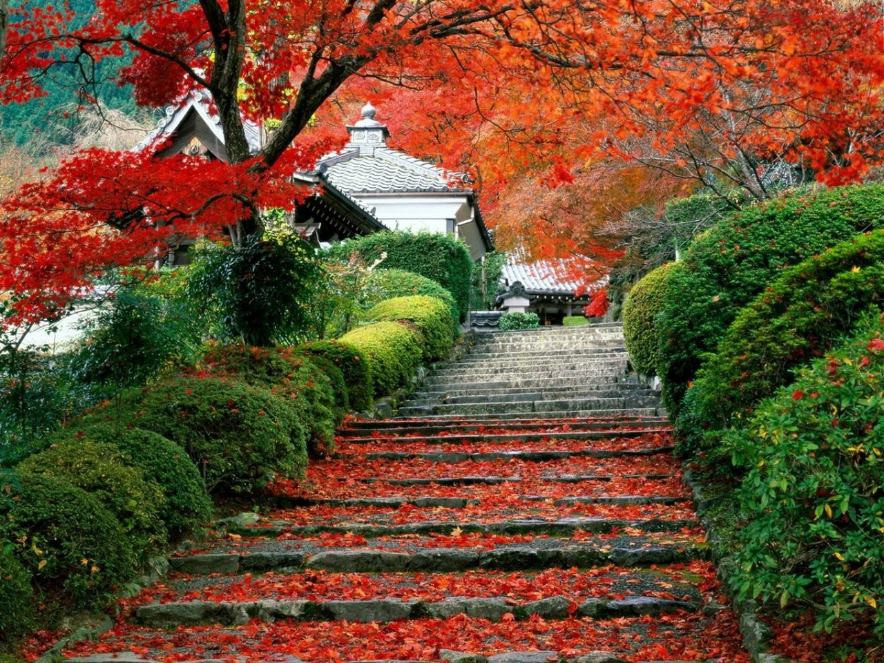 32281 download wallpaper Landscape, Autumn, Leaves, Asia screensavers and pictures for free