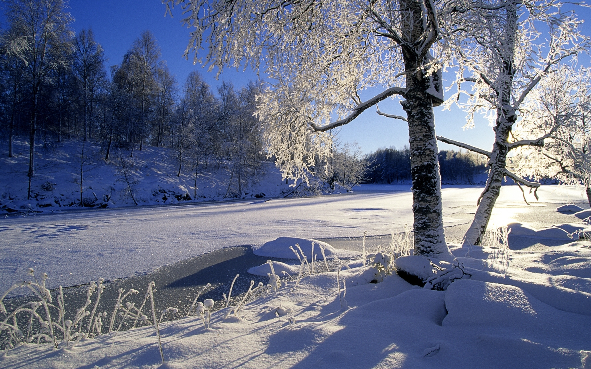 26558 download wallpaper Landscape, Winter, Trees, Sun, Snow screensavers and pictures for free