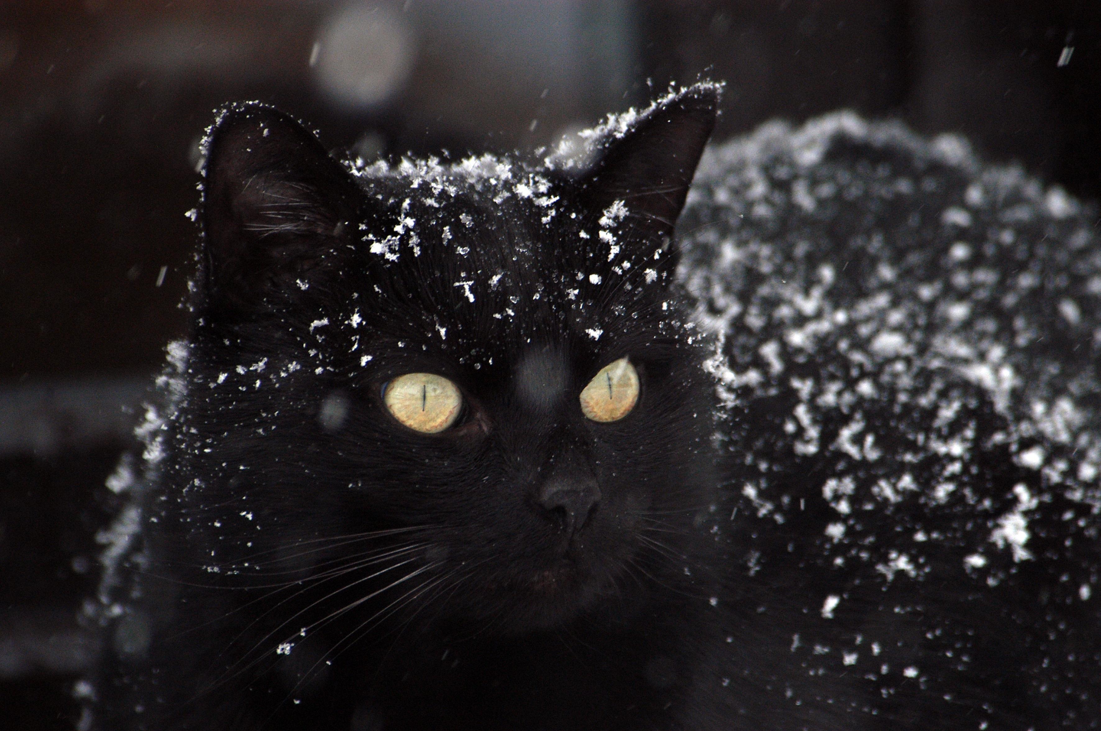 110976 скачать обои Животные, Кот, Зима, Снег, Черный - заставки и картинки бесплатно
