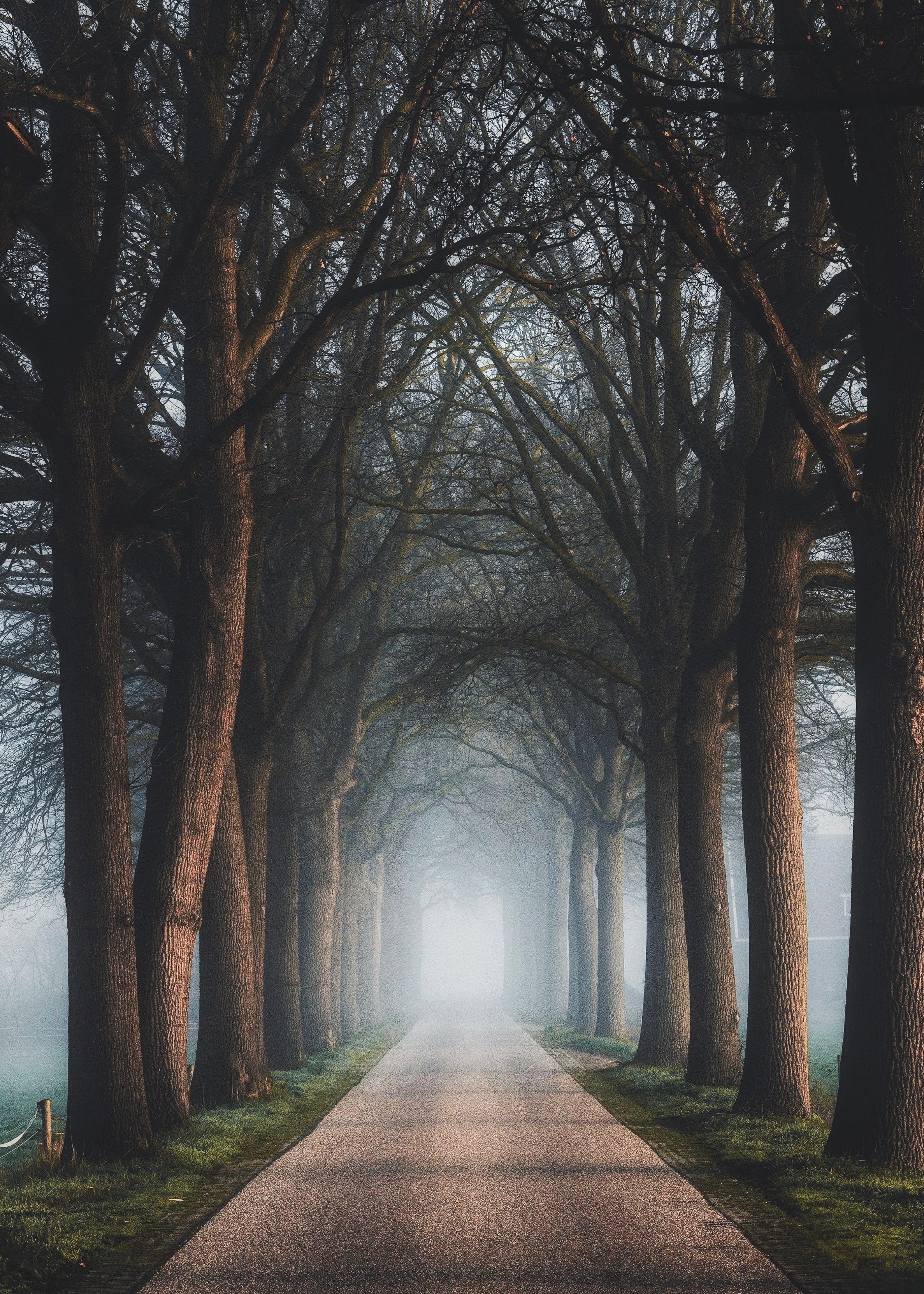 80160 papel de parede 2160x3840 em seu telefone gratuitamente, baixe imagens Natureza, Árvores, Estrada, Caminho, Névoa, Nevoeiro, Beco 2160x3840 em seu celular