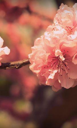 14478 скачать обои Растения, Цветы - заставки и картинки бесплатно