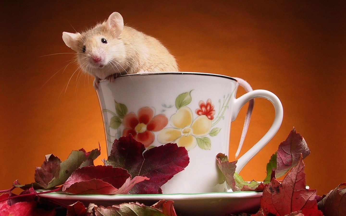 31945 Screensavers and Wallpapers Rodents for phone. Download Animals, Rodents pictures for free