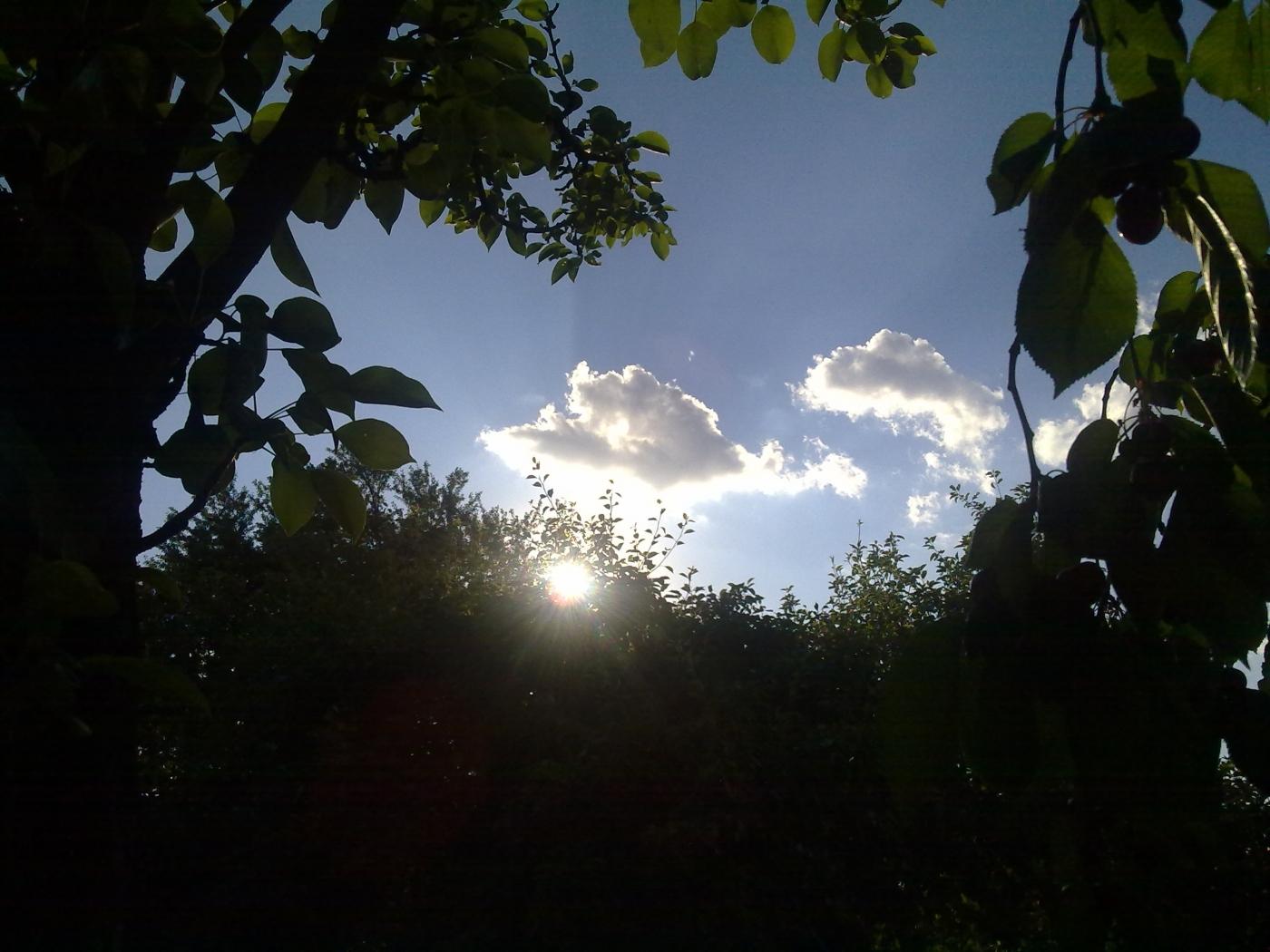 23328 скачать обои Пейзаж, Небо, Листья, Солнце, Облака - заставки и картинки бесплатно
