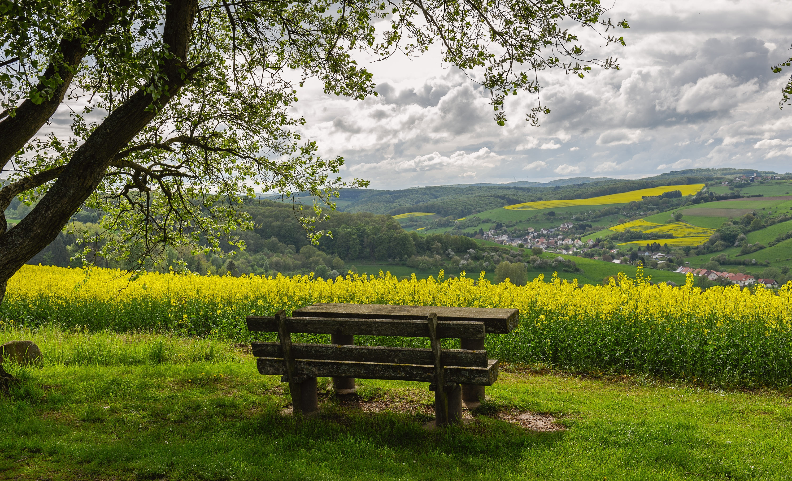118556 download wallpaper Bench, Nature, Landscape screensavers and pictures for free