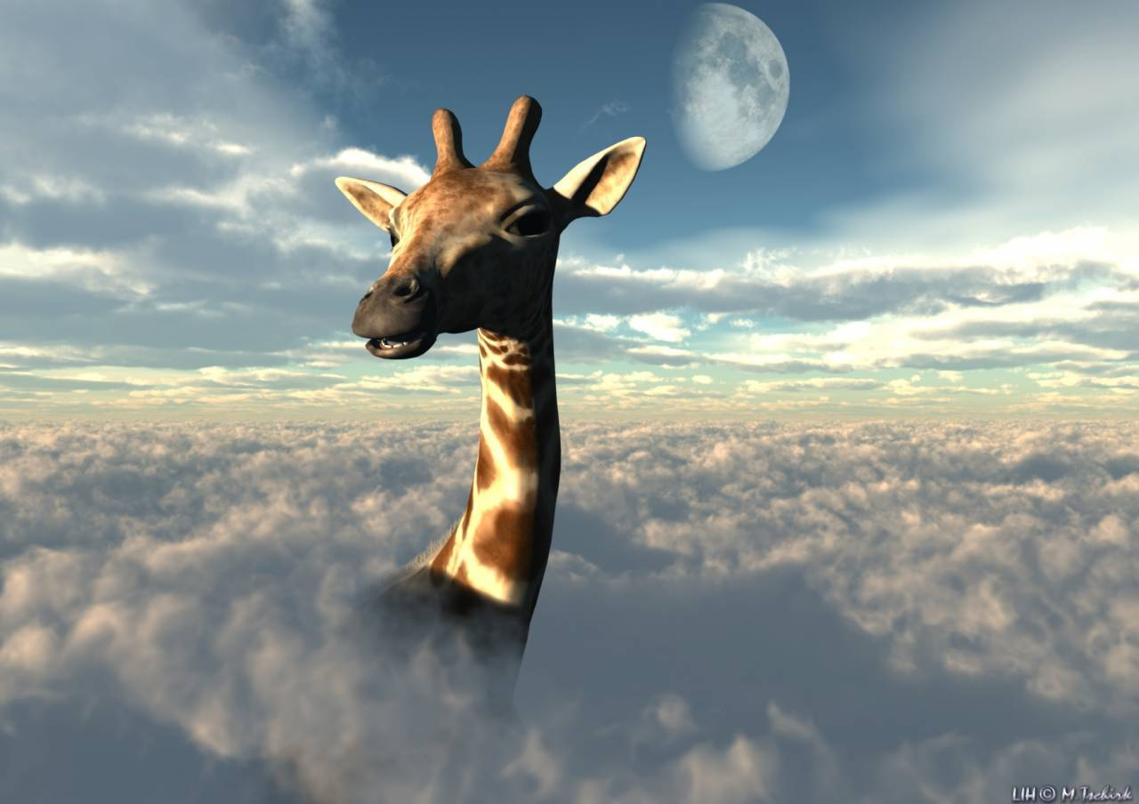 10135 download wallpaper Animals, Sky, Clouds, Giraffes screensavers and pictures for free