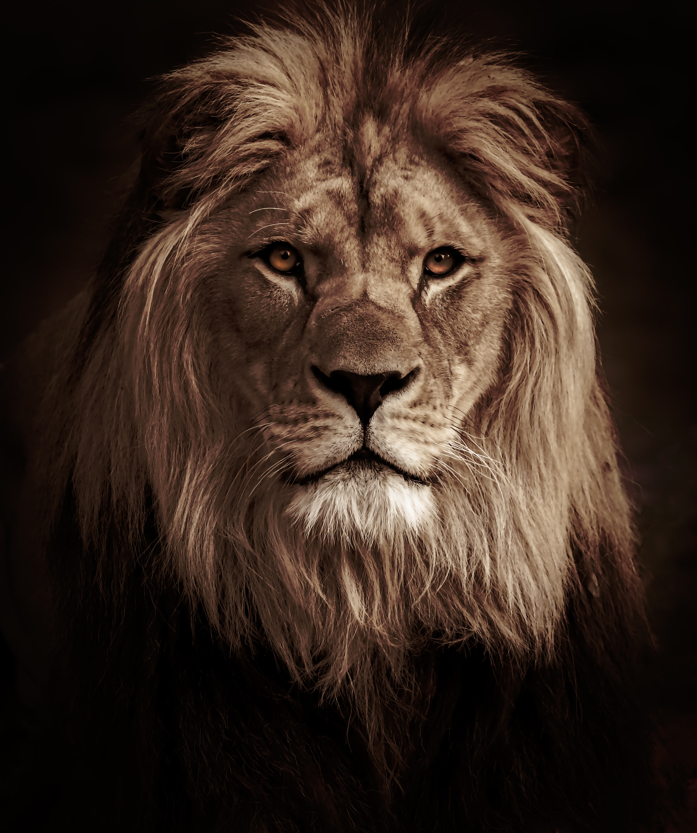 55431 download wallpaper Predator, Animals, Lion, Big Cat, Animal screensavers and pictures for free