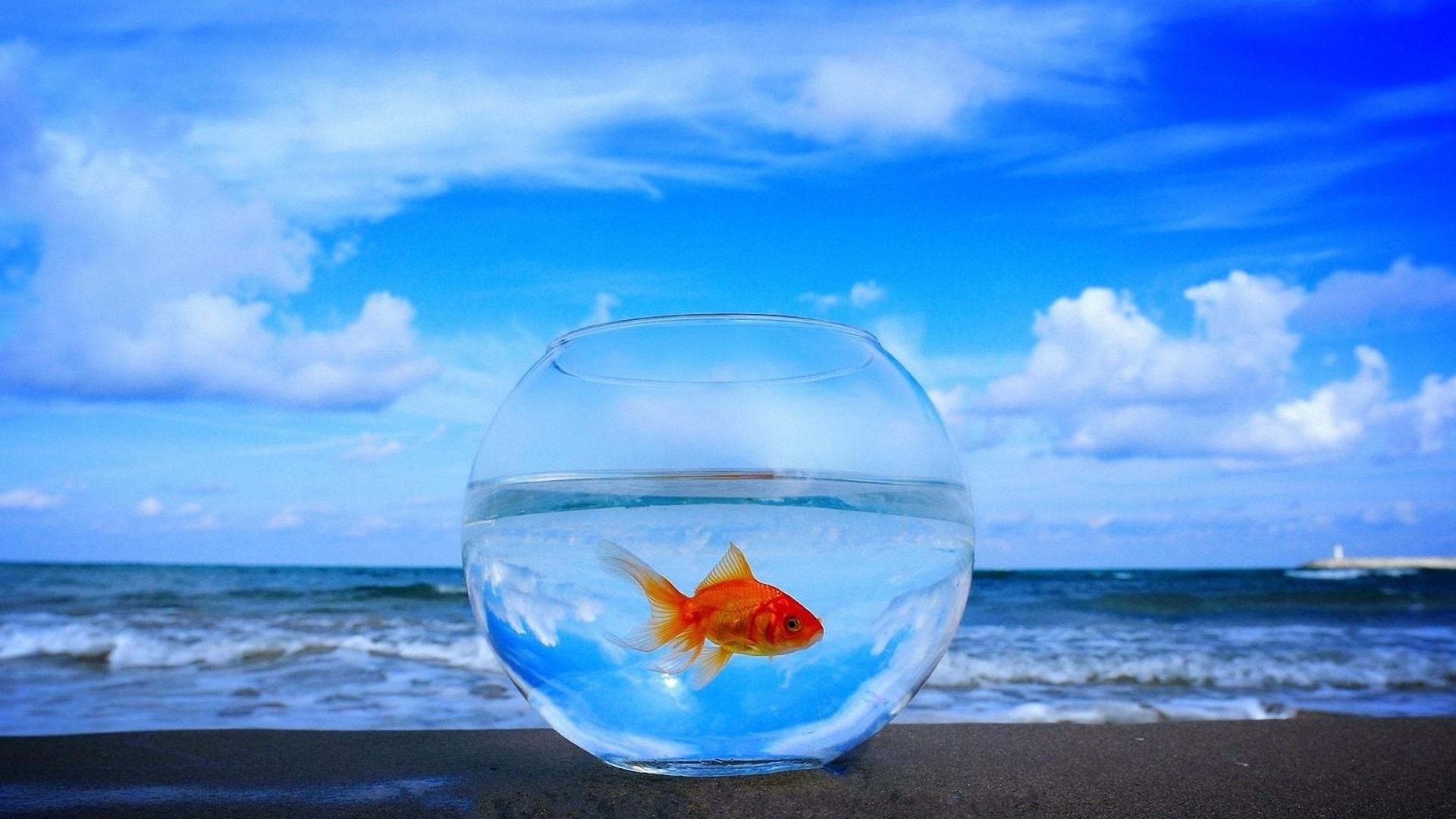 47514 Заставки и Обои Рыбы на телефон. Скачать Рыбы, Животные картинки бесплатно
