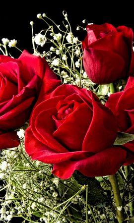 16466 скачать обои Растения, Цветы, Розы - заставки и картинки бесплатно