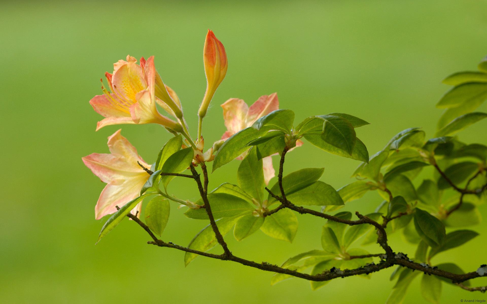 21085 скачать обои Растения, Цветы - заставки и картинки бесплатно