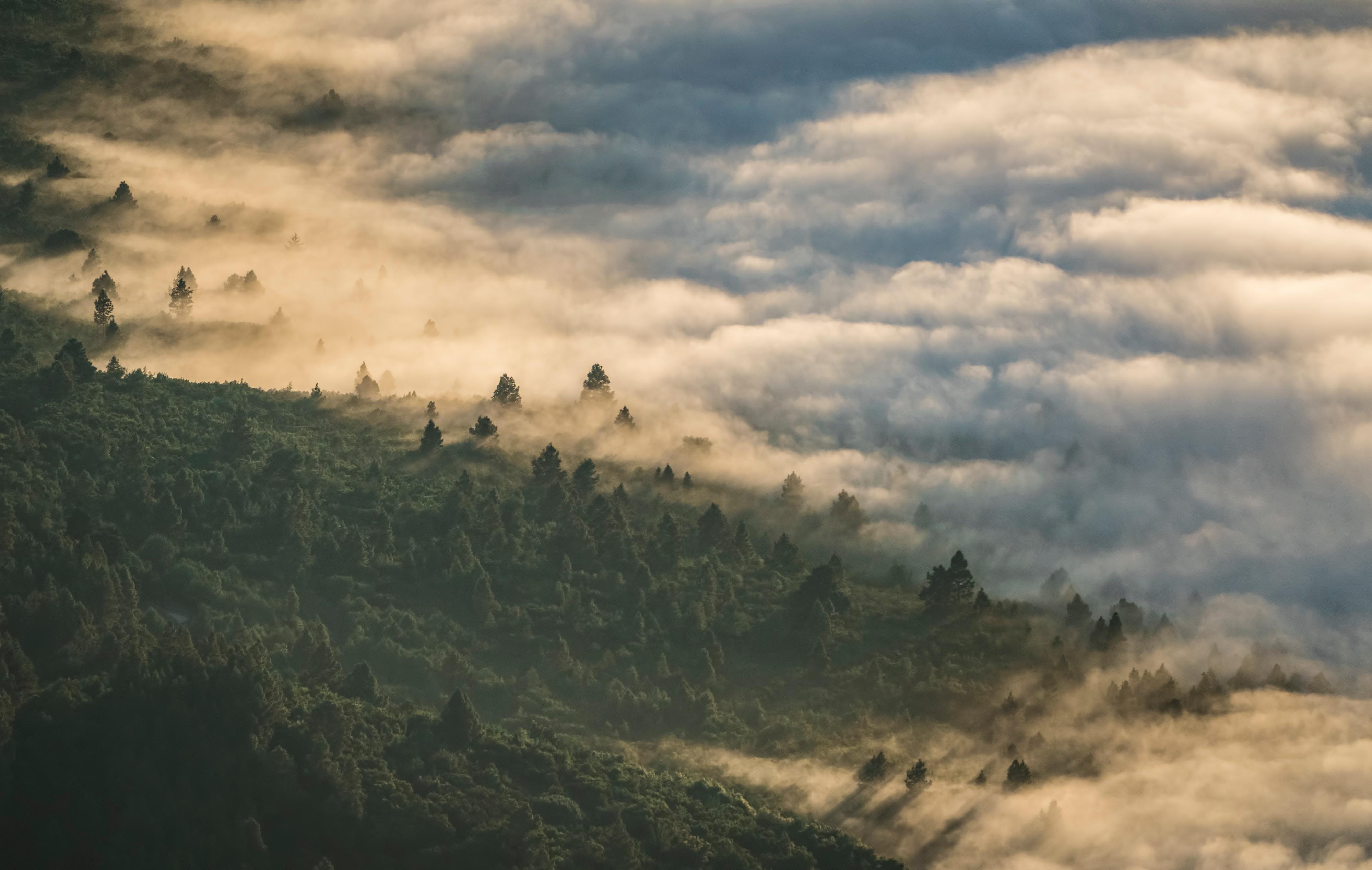 156641 免費下載壁紙 性质, 森林, 云, 从上面看, 顶视图, 多雾路段, 雾, 高度 屏保和圖片