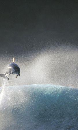 31557 baixar papel de parede Animais, Golfinhos - protetores de tela e imagens gratuitamente