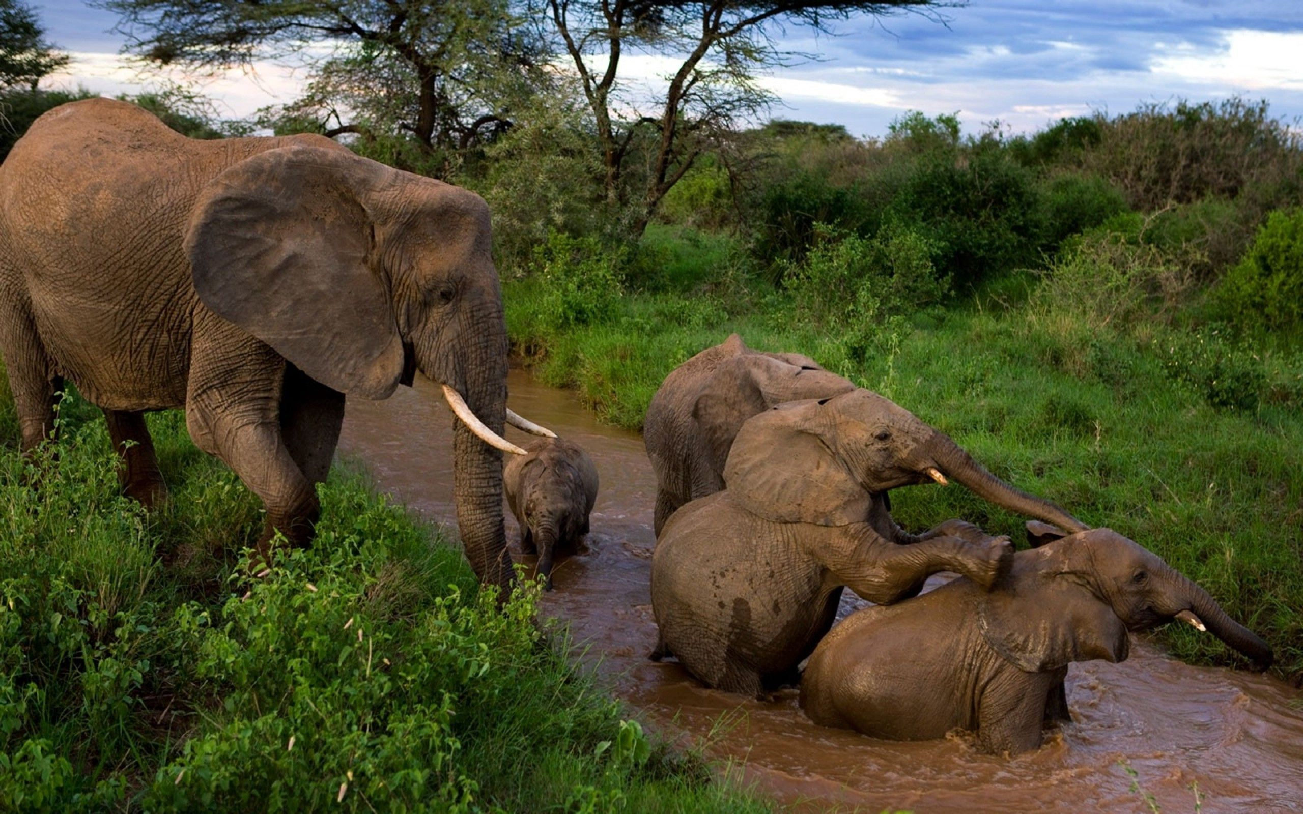 96077 Screensavers and Wallpapers Young for phone. Download Animals, Elephants, Young, Care, Mud, Dirt, Cubs, Bathing, Mother pictures for free