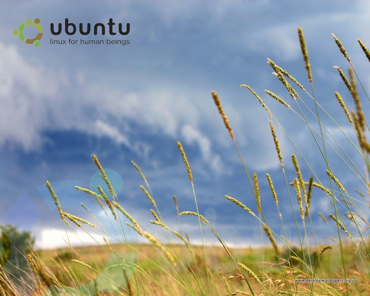 3109 скачать обои Растения, Пейзаж, Трава, Небо - заставки и картинки бесплатно