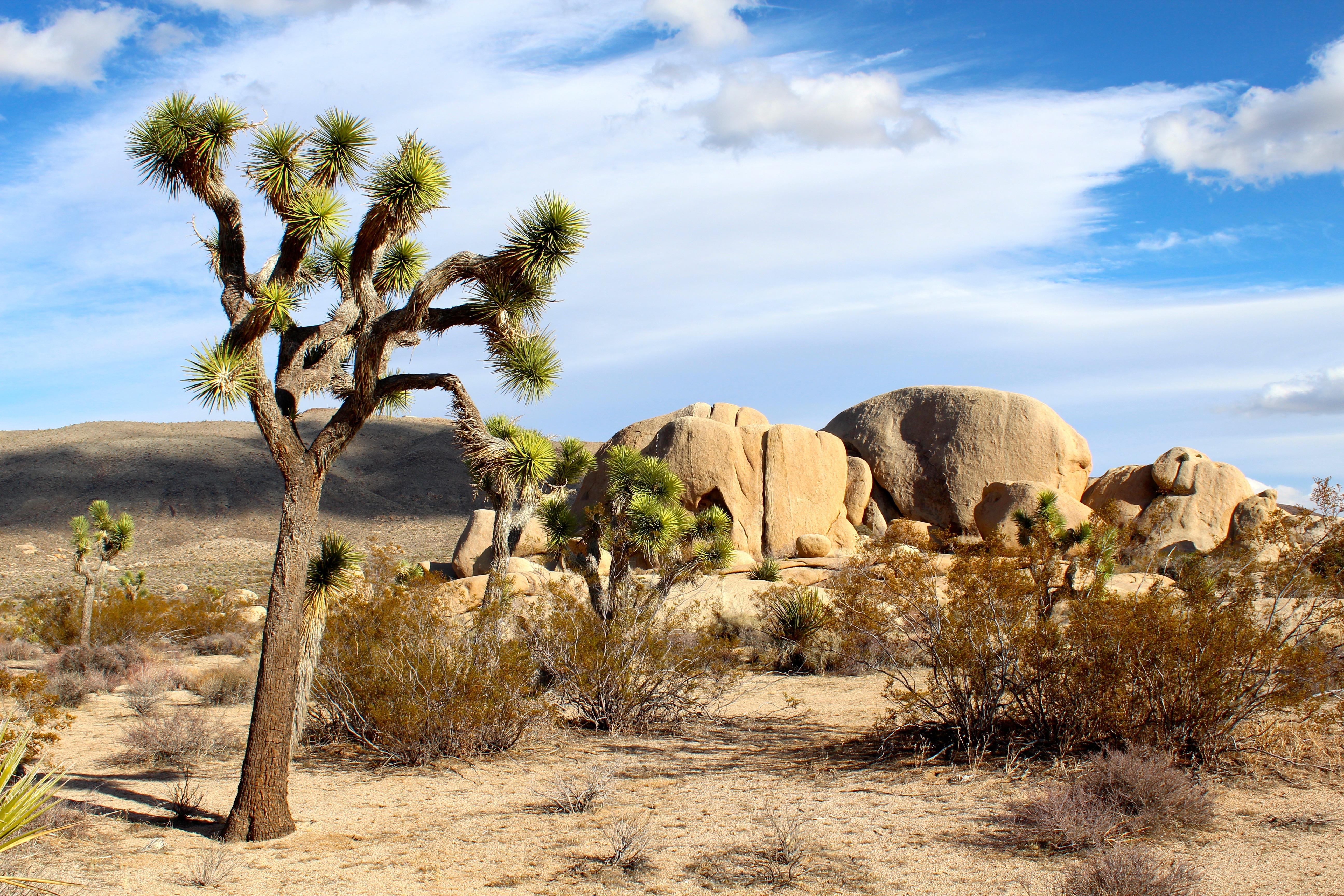 76805 Заставки и Обои Песок на телефон. Скачать Природа, Песок, Национальный Парк, Джошуа, Мохаве картинки бесплатно