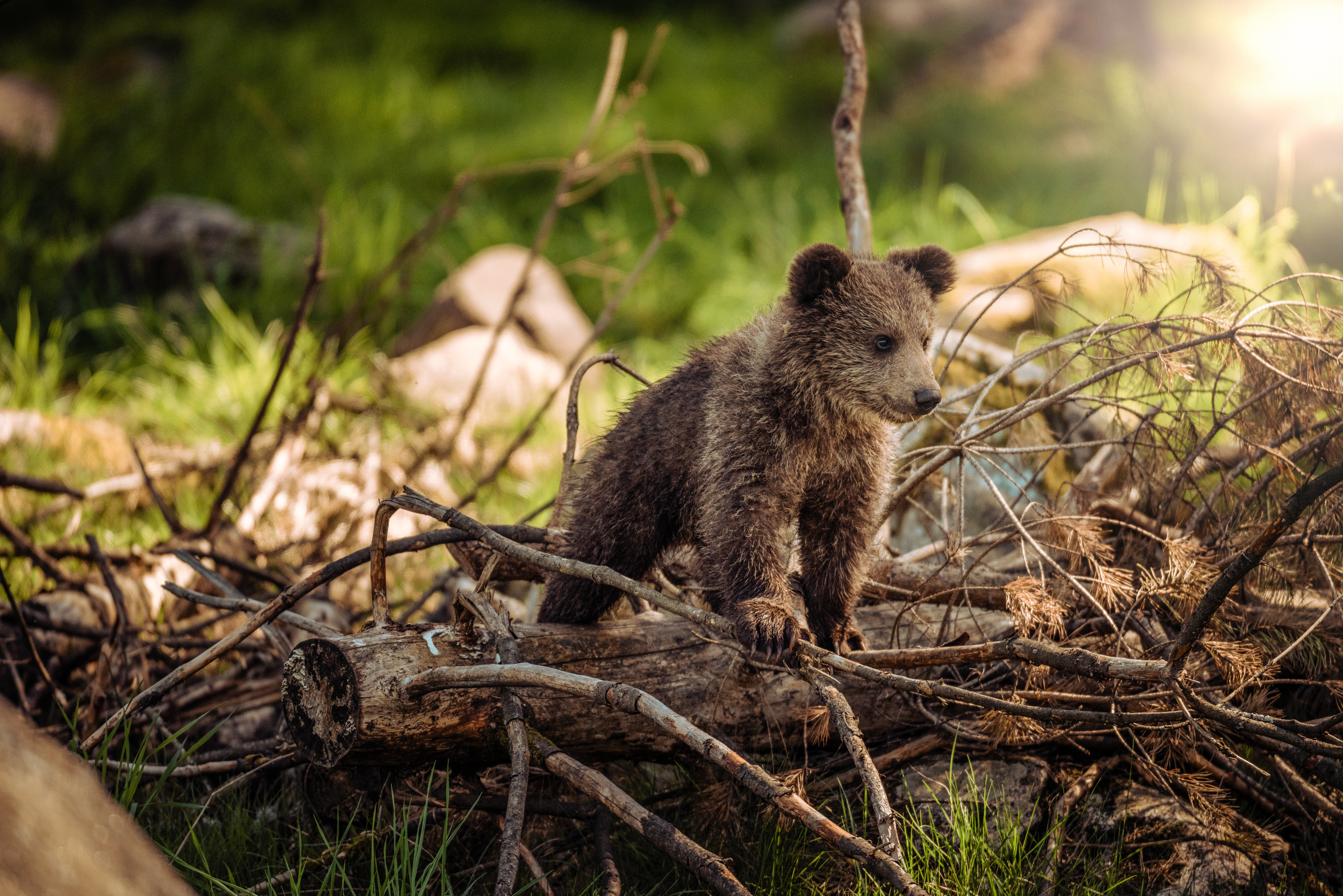 128674 Screensavers and Wallpapers Young for phone. Download Animals, Teddy Bear, Young, Branches, Bear, Stroll, Joey pictures for free