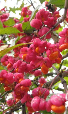 26178 скачать обои Растения, Цветы, Деревья - заставки и картинки бесплатно