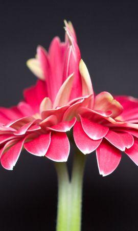 45337 скачать обои Растения, Цветы - заставки и картинки бесплатно