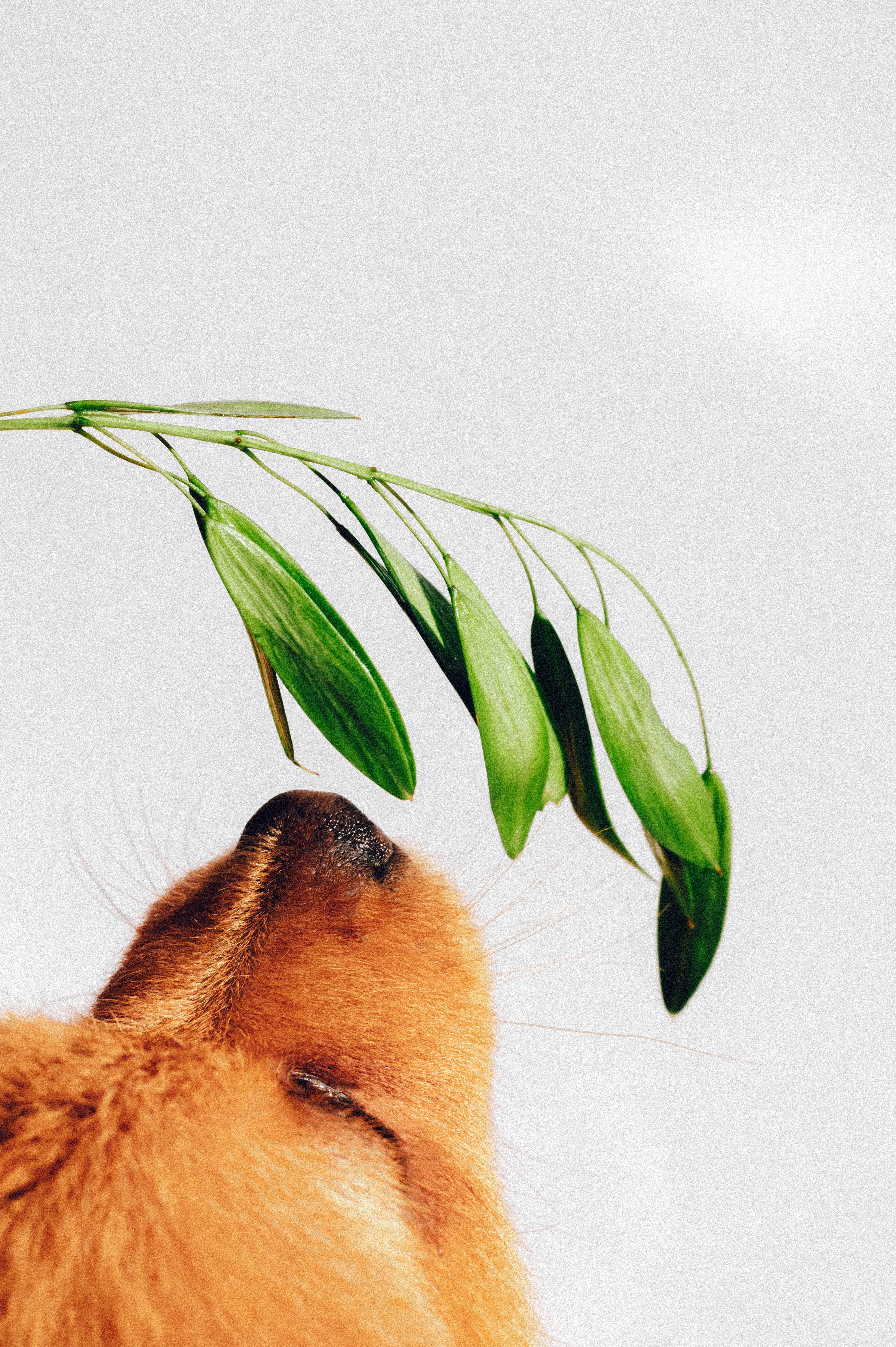 121310 Screensavers and Wallpapers Nose for phone. Download Animals, Plant, Dog, Puppy, Nose, To Sniff, Smell pictures for free