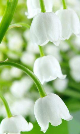 10117 скачать обои Растения, Цветы, Колокольчики - заставки и картинки бесплатно