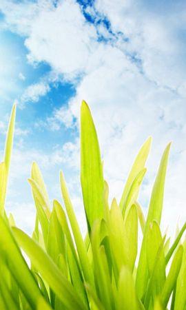12180 скачать обои Растения, Трава, Насекомые, Небо, Божьи Коровки - заставки и картинки бесплатно