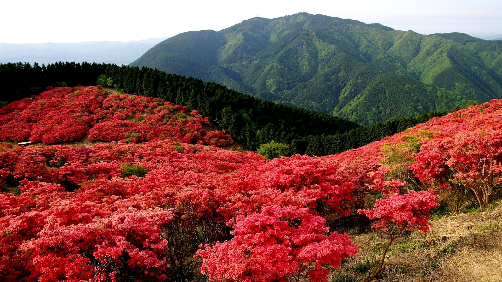 23484 download wallpaper Landscape, Flowers, Mountains screensavers and pictures for free