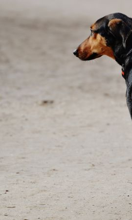 157700 download wallpaper Animals, Dog, Stroll, Spotted, Spotty screensavers and pictures for free
